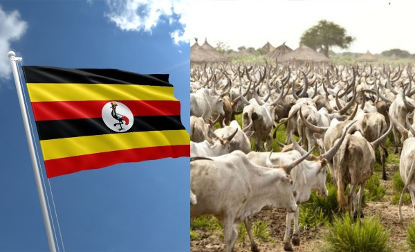 Uganda Set To Start Issuing Birth Certificate To Cows