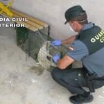 La Guardia Civil detiene a tres personas por maltrato animal en la provincia de Valencia