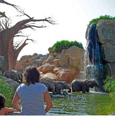 ES NOTICIA.. Bioparc supera los cinco millones de visitantes en su décimo cumpleaños