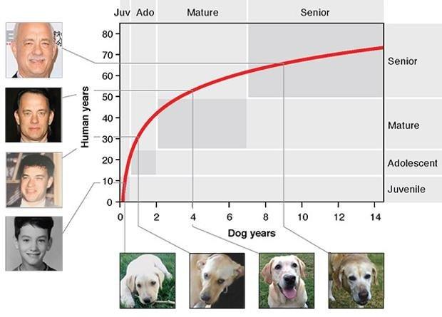 Gráfico que calcula la edad de un perro en «años humanos» - Cell Press