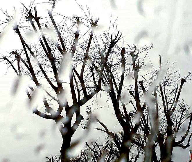 Lluvia de otoño. Rosa Muriel /informaValencia.com