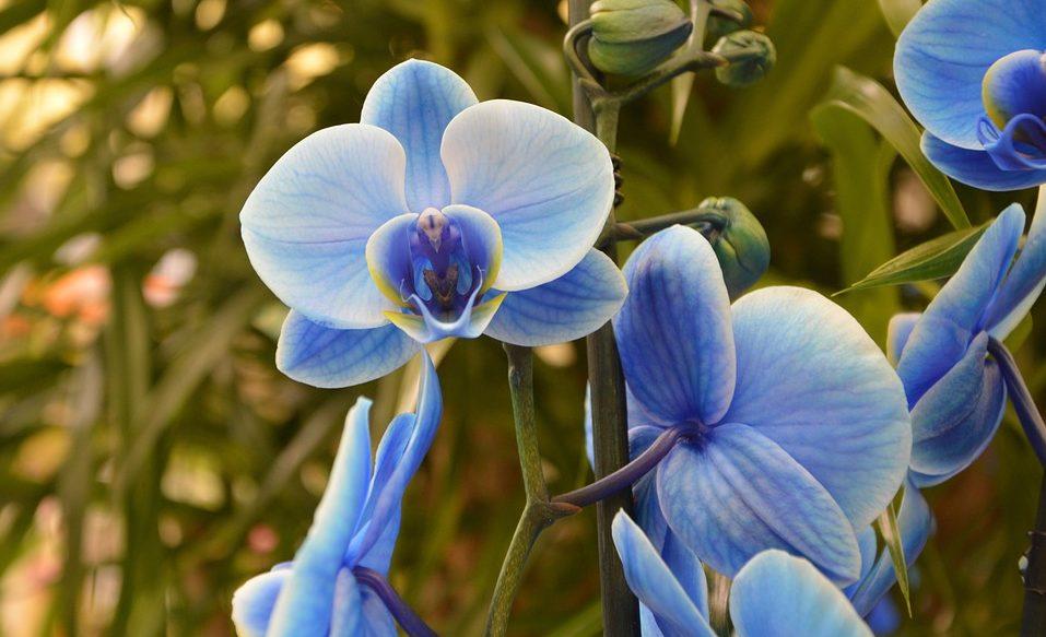 L Orchidea In Camera Da Letto