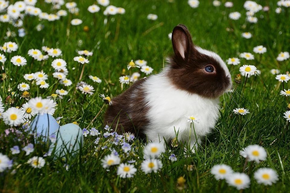 Coniglio Nano razze comportamento prezzo e cose da sapere