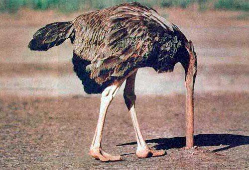 avestruz.jpg?fit=500,342&ssl=1