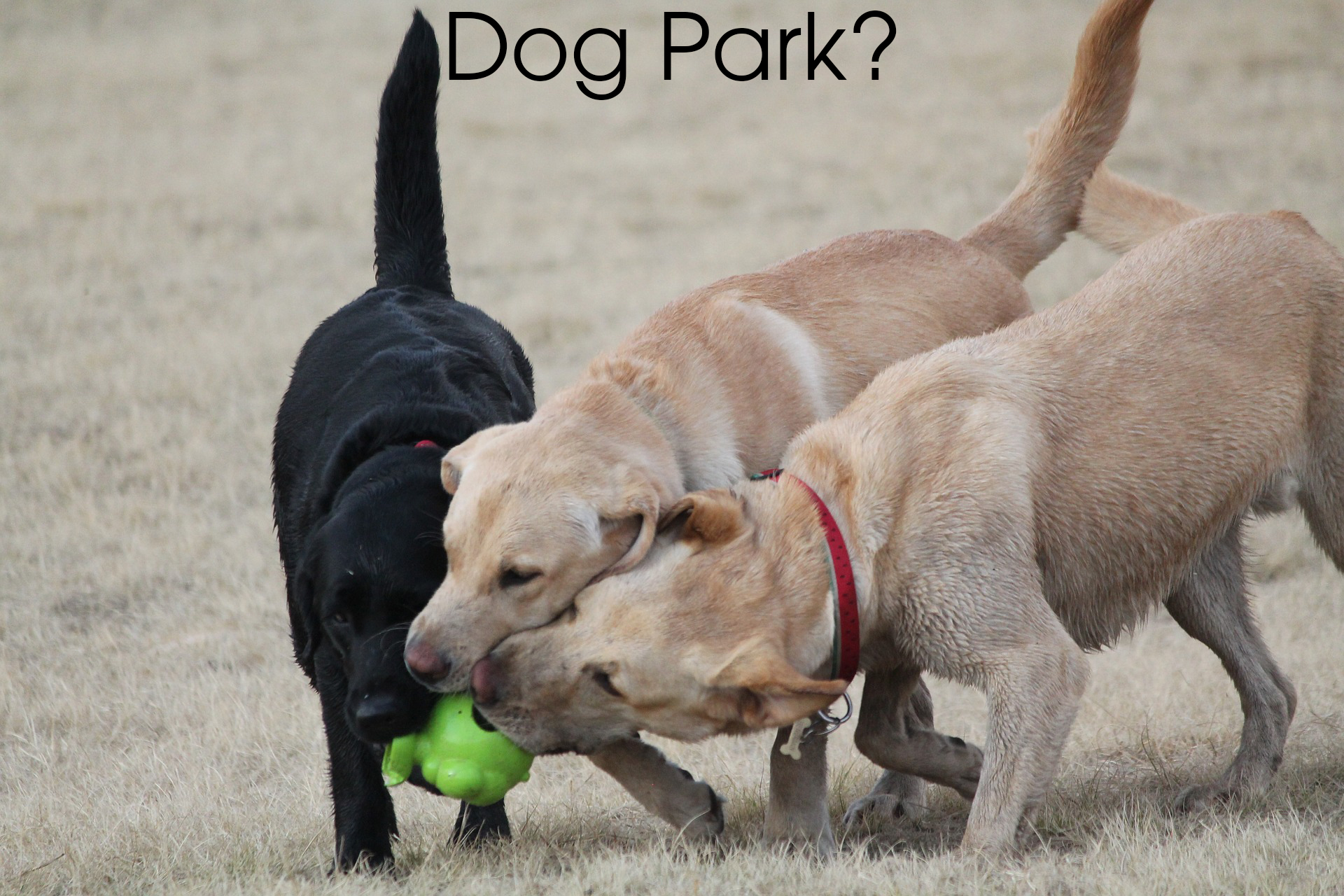 dogs-2690582_1920_1515165828463.jpg