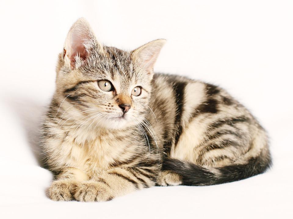 CAT_1544709071028.jpg