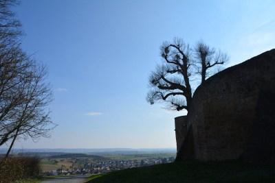 Burg Steinsberg65