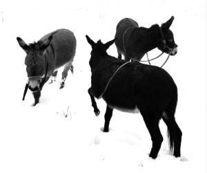 Eselwanderung zum Lärmfeuer am 30. März 2019