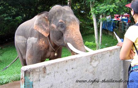 """Nouvelles mesures contre les """"éléphants mendiants"""""""