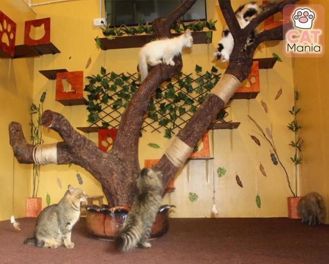 cat house arnab village ranau
