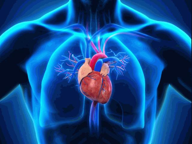 HUMAN-HEART.