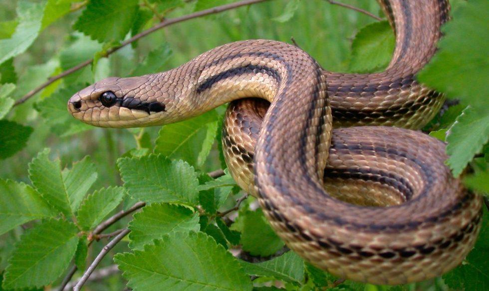 Movimiento de las serpientes