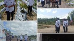 Bupati Dollah Mando Kunjungi Kebun & Sekolah Porang di Sidrap