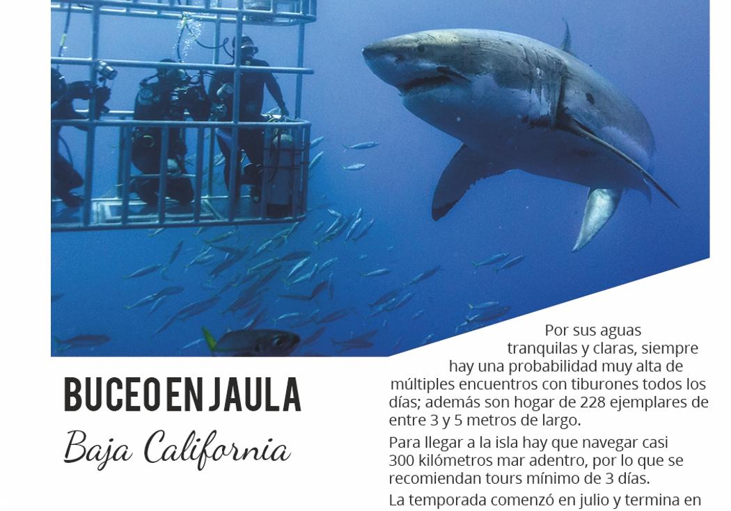2. buceo en jaula en Baja California