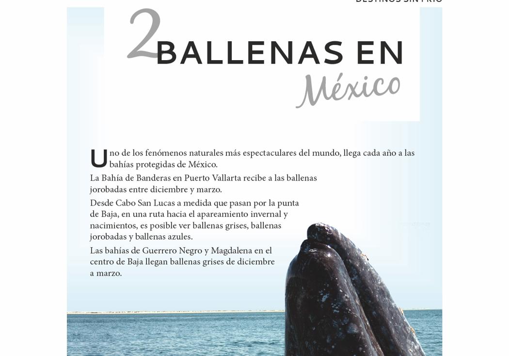 2. Ballenas en México