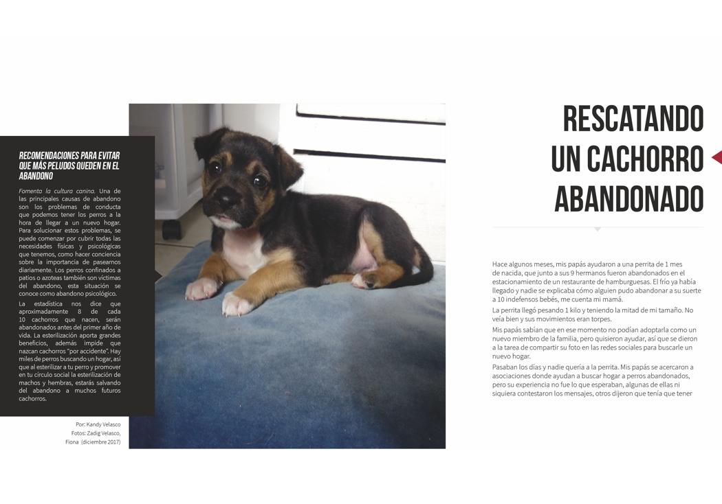 Rescatando a un cachorro abandonado