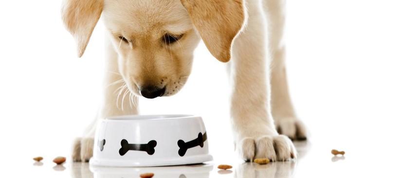 Mitos sobre la alimentación en los perros