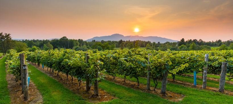 Canadá a través de sus vinos