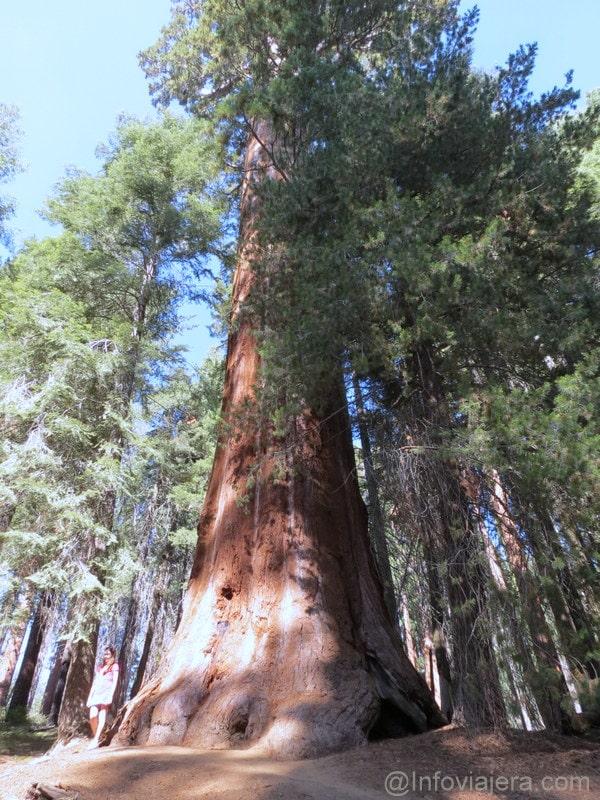 Sequoia9