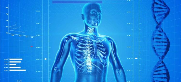 Color photo of a human skeleton with DNA, used to present the importance of healthcare cybersecurity.