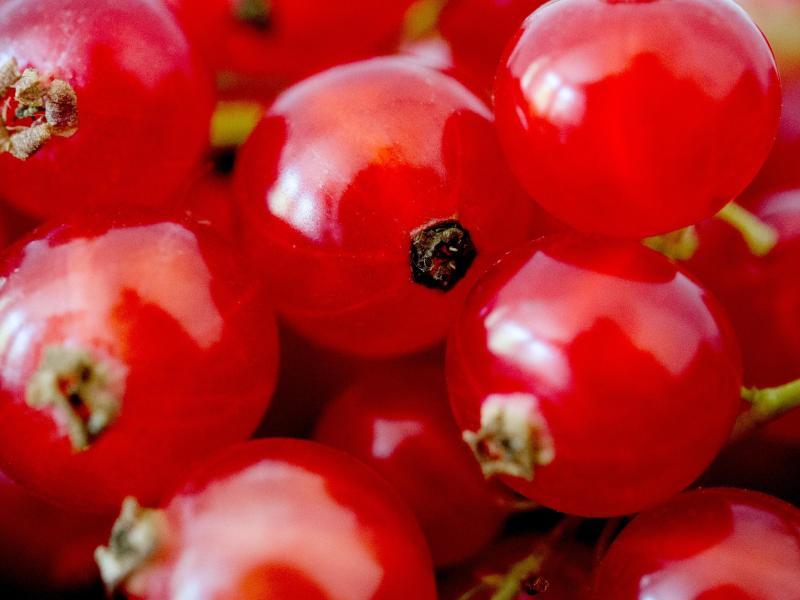 In Johannisbeeren steckt reichlich Flüssigkeit: Mit etwas Zucker und Wasser lässt sich aus den Früchten schnell Saft machen. Foto: Franziska Gabbert/dpa-tmn
