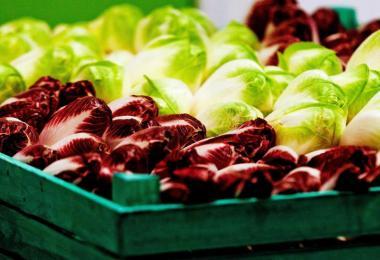 Kombiniert mit Äpfeln, Fenchel oder Honig ist Chicorée weniger bitter. Foto: Monique Wüstenhagen/dpa-tmn