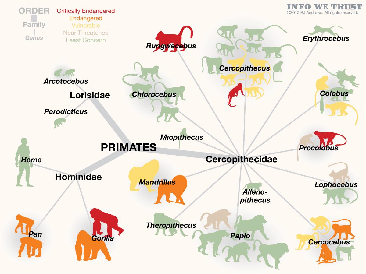 Endangered Safari – INFO WE TRUST