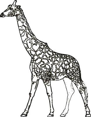 Malvorlage Giraffe - Giraffenvorlage zum Ausmalen