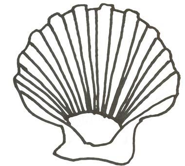 Muschel Malvorlage - Ausmalbild Muschel