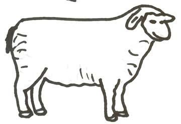 Schaf Malvorlage - Schaf Zeichenvorlage zum Ausmalen