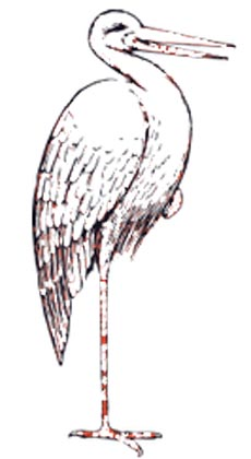 Storch Malvorlage - ausmalbild Klapperstorch