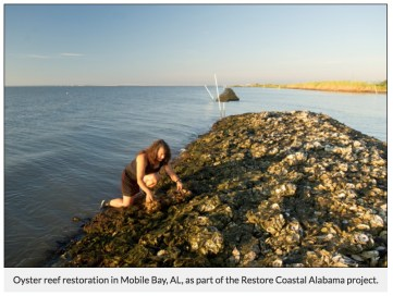 Oyster reef restoration in Mobile Bay, AL, as part of the Restore Coastal Alabama project.