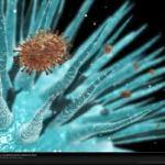 virus care trece prin mucoasa