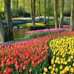 Holanda busca enfermeros