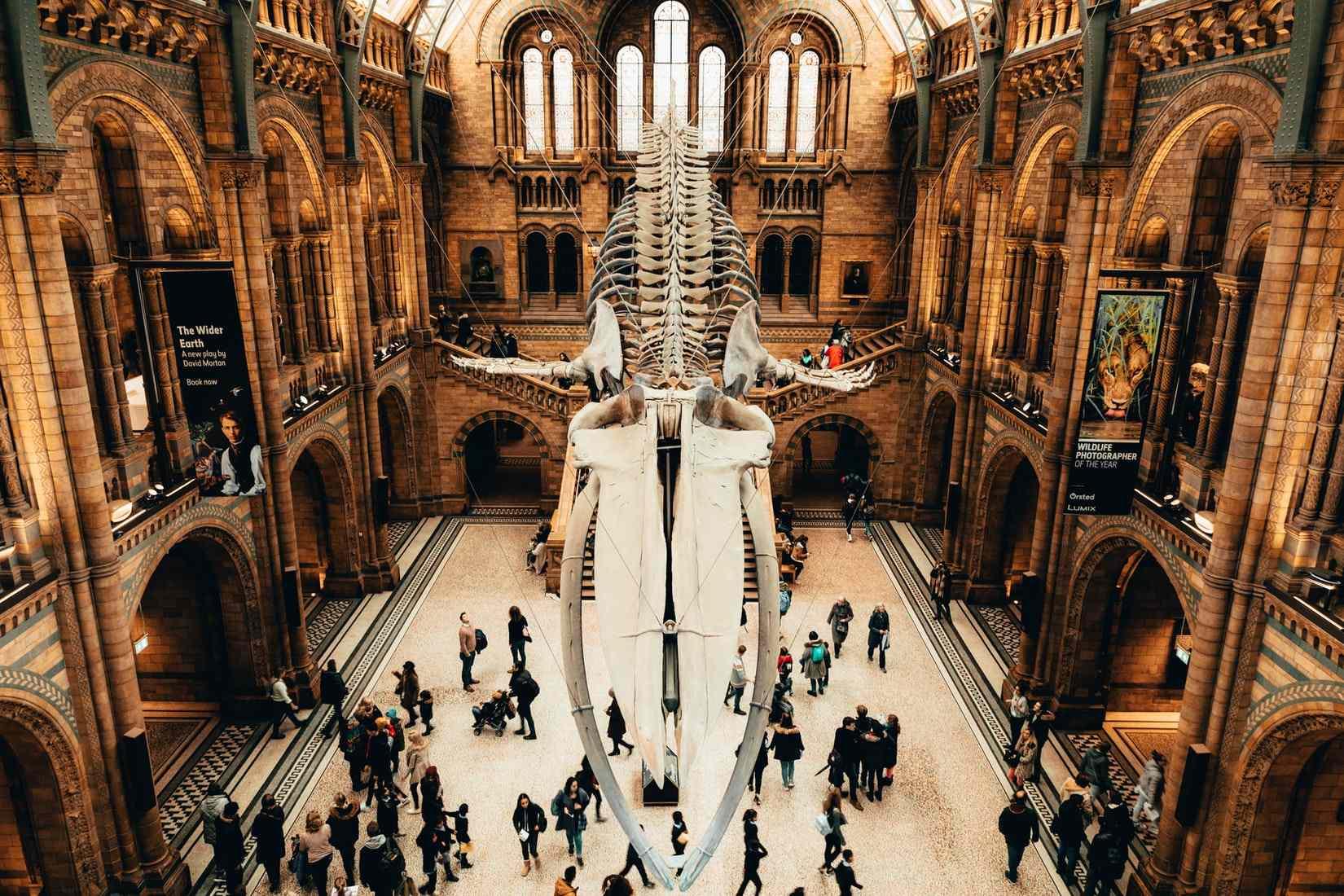 Voluntariado en Londres en los museos de la ciudad