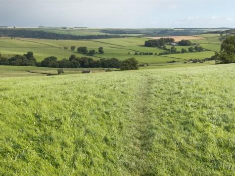 Track across grassy field