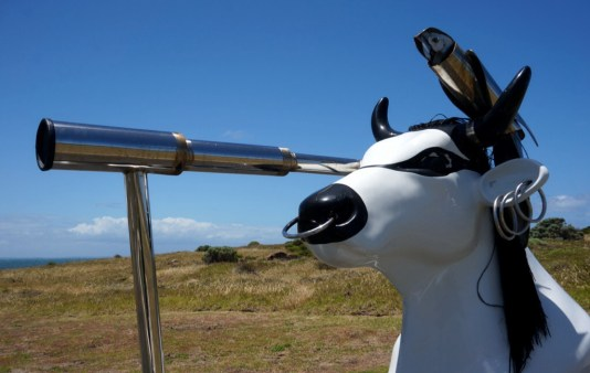 Cape Leeuwin cow