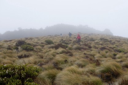 Tussock near Luxmore