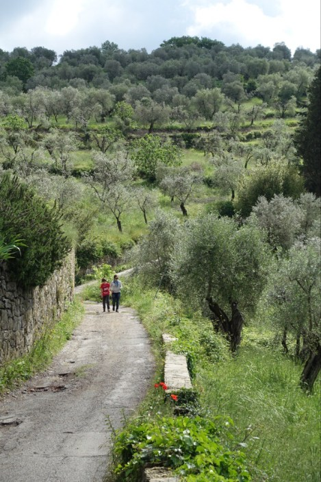 Quiet country road through an olive grove