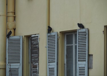 Pigeons on shutters, seen from our Nice apartment.