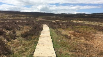 Paved path across boggy area in heather