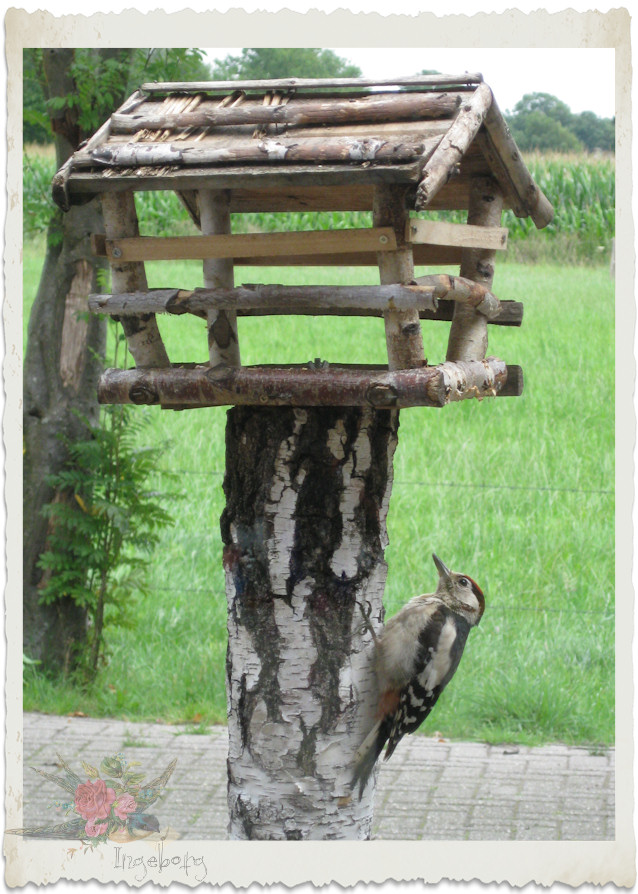 A woodpecker came to visit