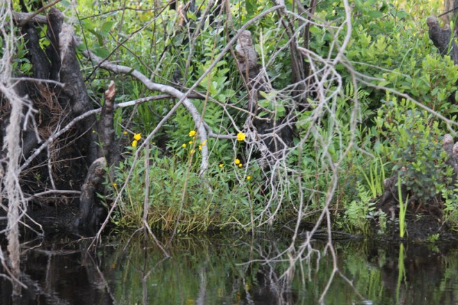 4.6.12 ~ Okefenokee National Wildlife Refuge, Georgia