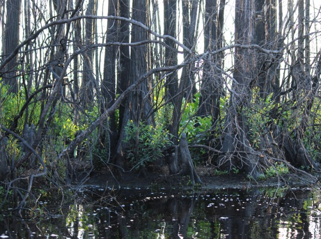 4.6.12 ~ Okefenokee National Wildlife Refuge, Georgia