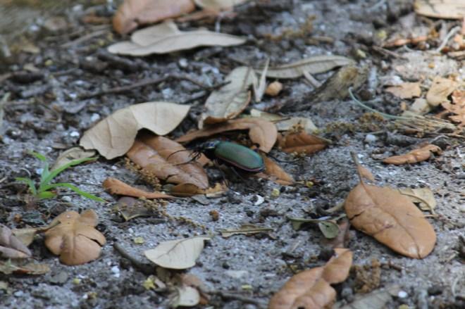 4.9.12 ~ Cumberland Island, Georgia