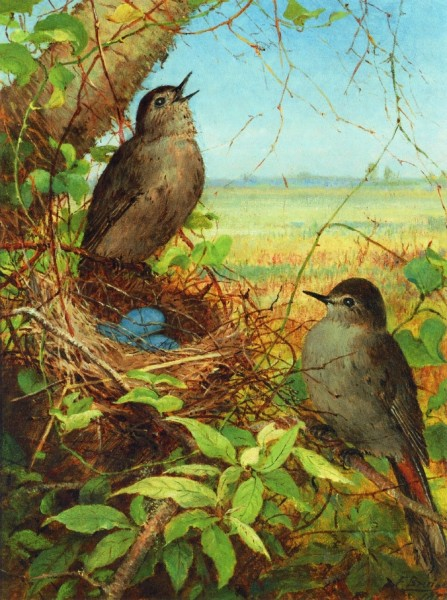 """""""Thrushes' Nest"""" by Fidelia Bridges (May 19, 1834 – May 14, 1923) American Painter"""