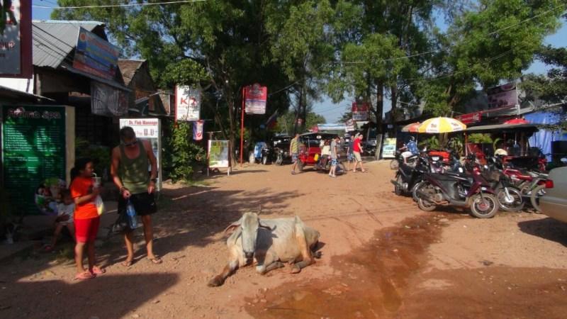 Ko med bækket ben i Sihanoukville