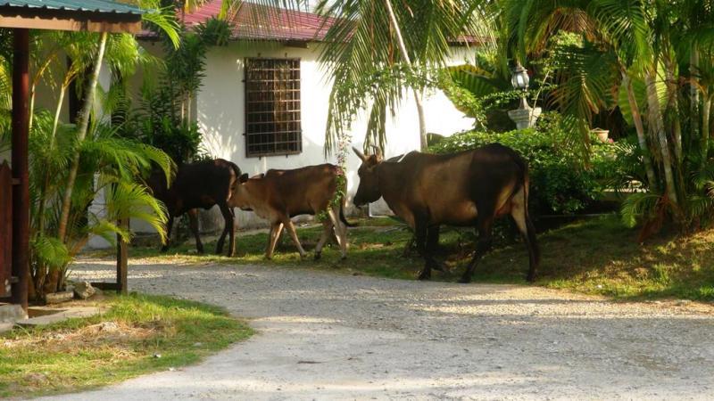 langkawi trail, hike, vandre, malaysia