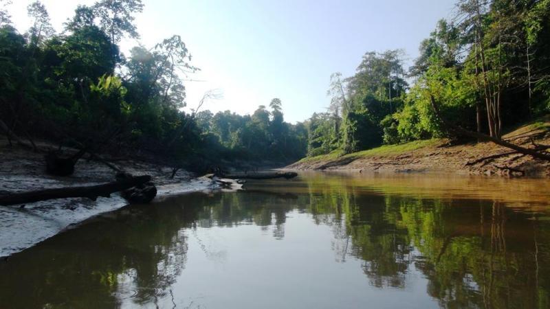 kinabatangan river, jungle trip, borneo, malaysia