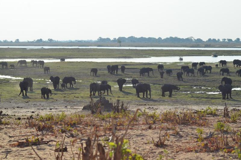 1. Chobe National Park (112)
